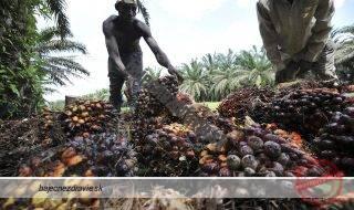 palmovy-olej